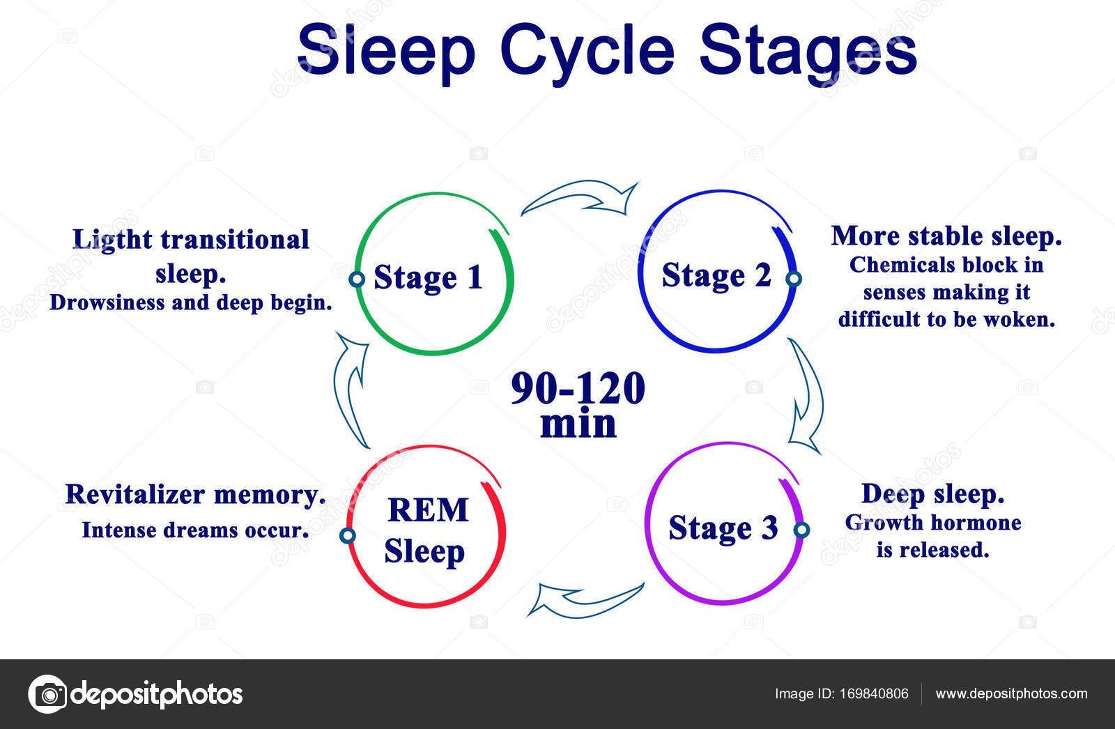 Diagram Of Sleep Cycle Stages  U2014 Stock Photo  U00a9 Vaeenma  169840806