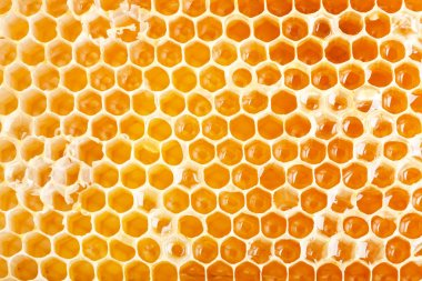 Close up view of honeycomb as background stock vector