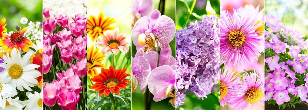 collage of various flowers
