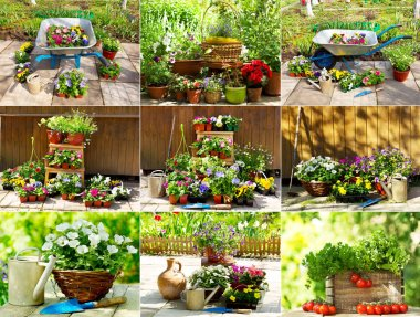 collage of flower plant and gardening tools