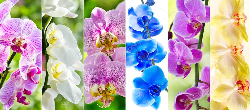 collage of various orchid flowers