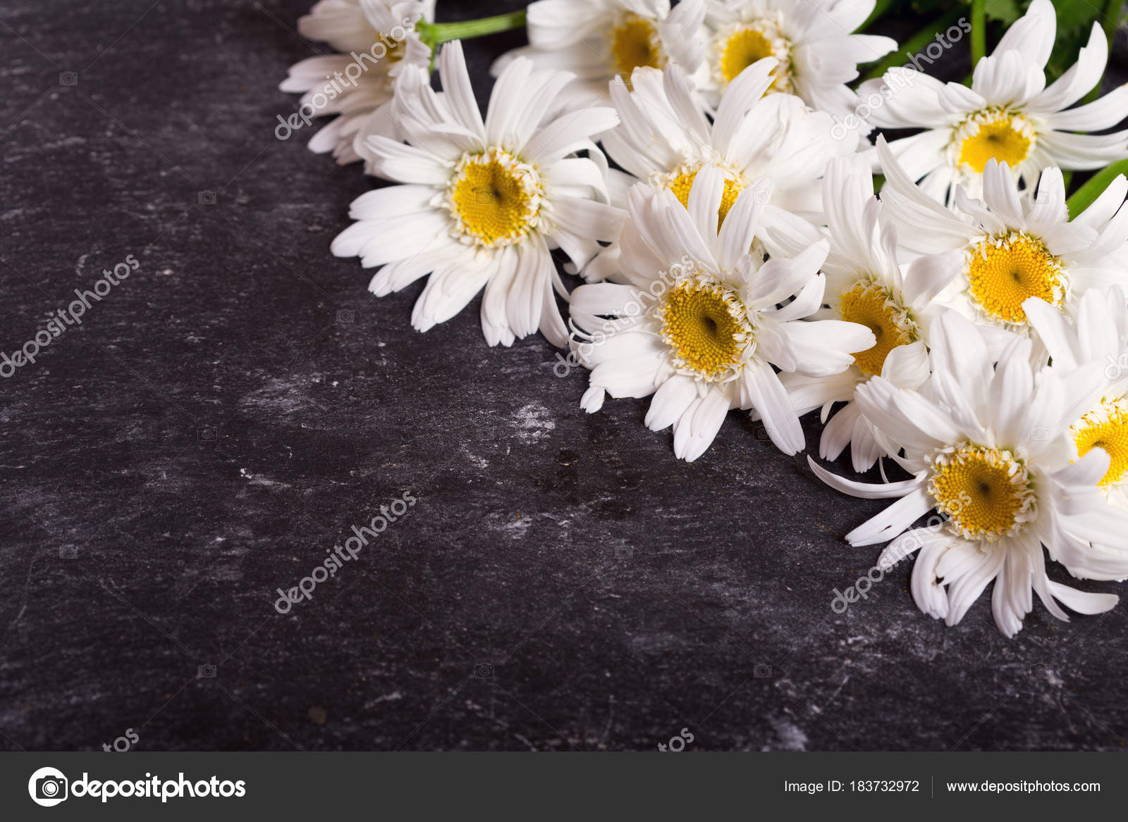 Daisy flowers on dark table stock photo nitrub 183732972 bouquet of daisy flowers on dark table photo by nitrub izmirmasajfo