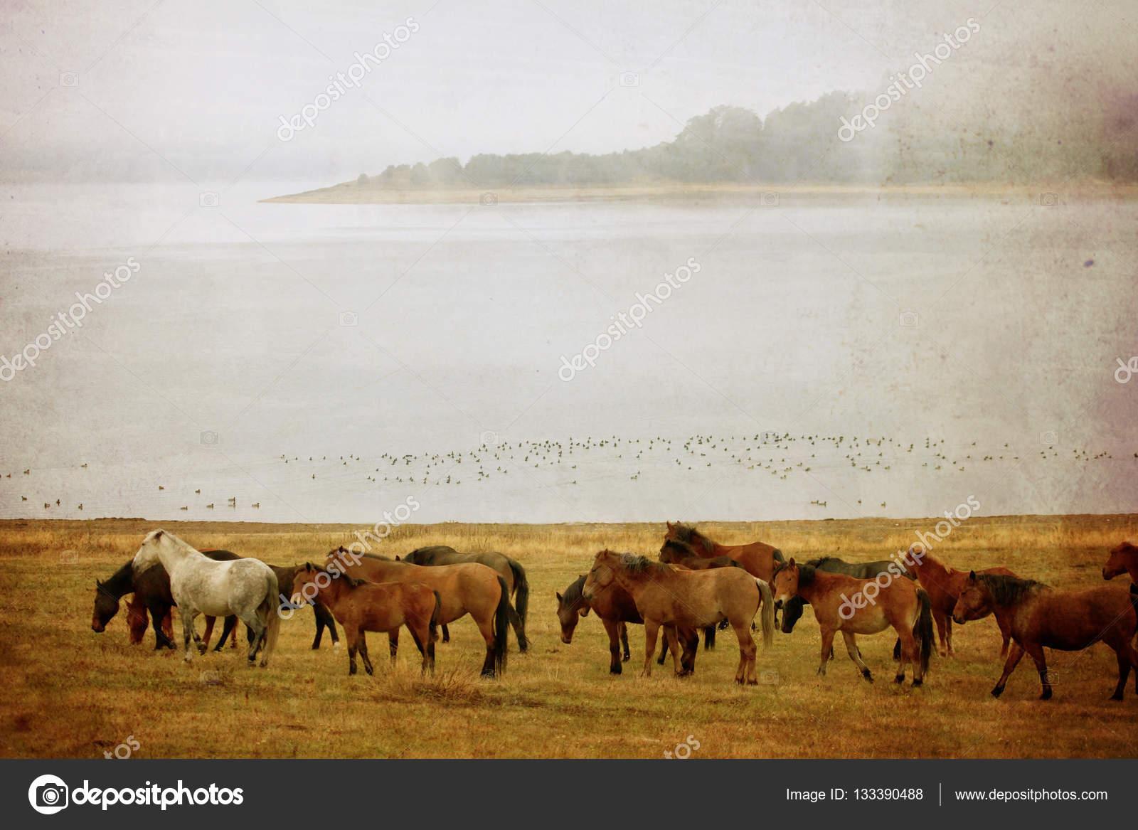 Obraz Konia Vintage Zdjęcie Stockowe Sliper84 133390488