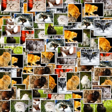 Collage several cats pictures