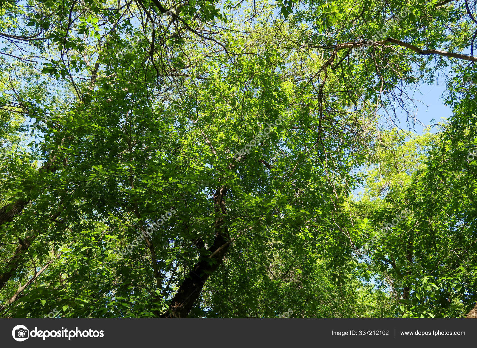 Green Leaves Trees View Blue Sky Spring Nature Stock Photo C Kzwwsko 337212102