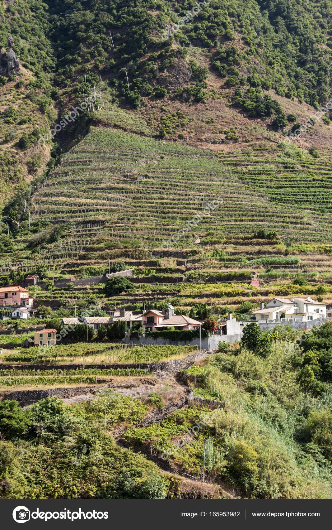 Imágenes De Cultivo En Terrazas Cultivo Villa Y Terraza