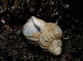 Seashell na kamenném pozadí