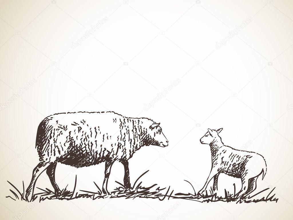 hand-drawn sketch of sheep and lamb