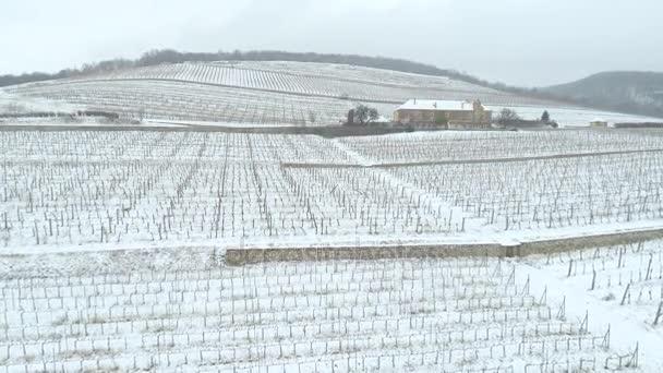 Luftbild vom Weinberg im Winter mit Schnee
