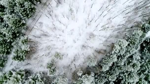 Aerial Flug über Winterbäume