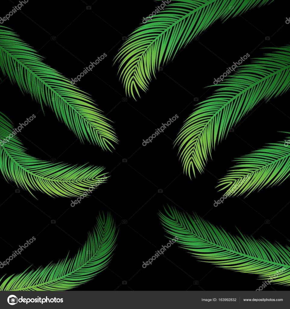 feuilles de palmier sur fond noir image vectorielle hunthomas 163992832. Black Bedroom Furniture Sets. Home Design Ideas