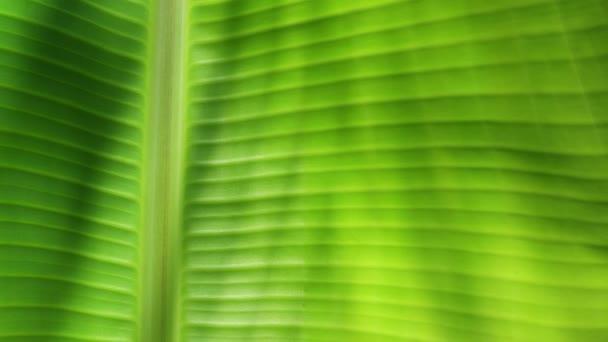 zöld levél a természetben