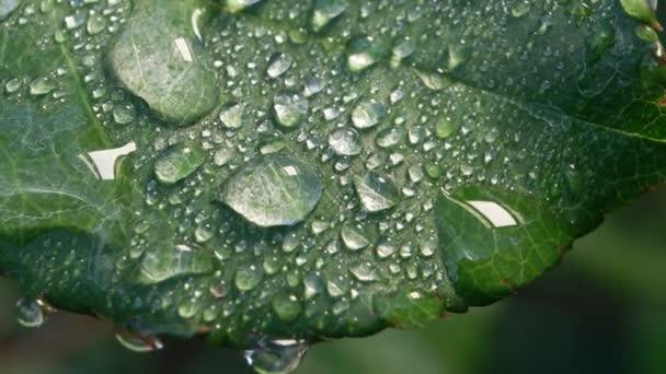 zelený list v přírodě