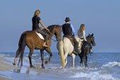 Cavalieri del cavallo in mare