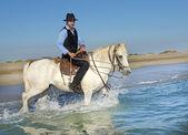 Cavaliere del cavallo nel mare