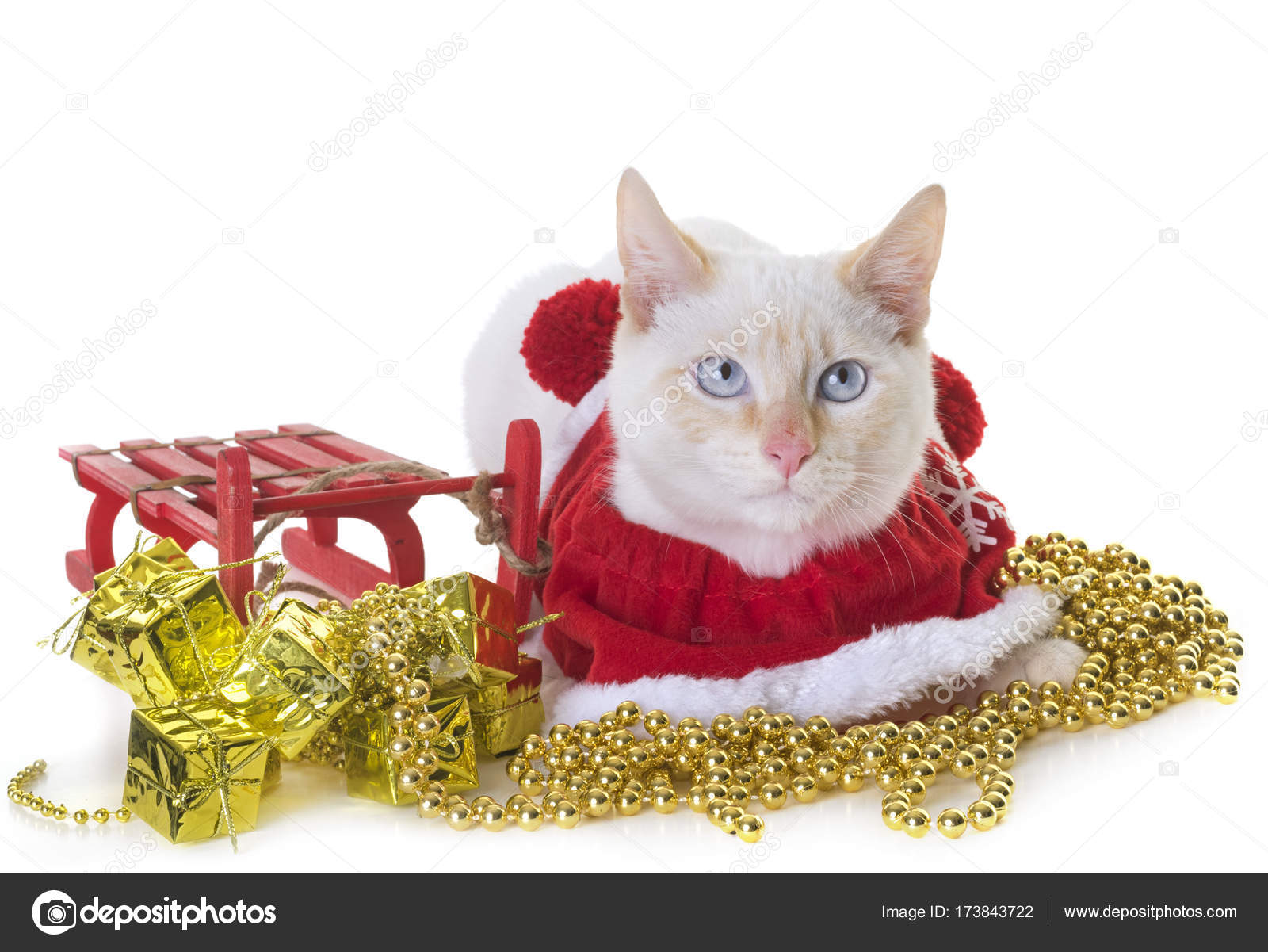 white kitten and christmas — Stock Photo © cynoclub #173843722