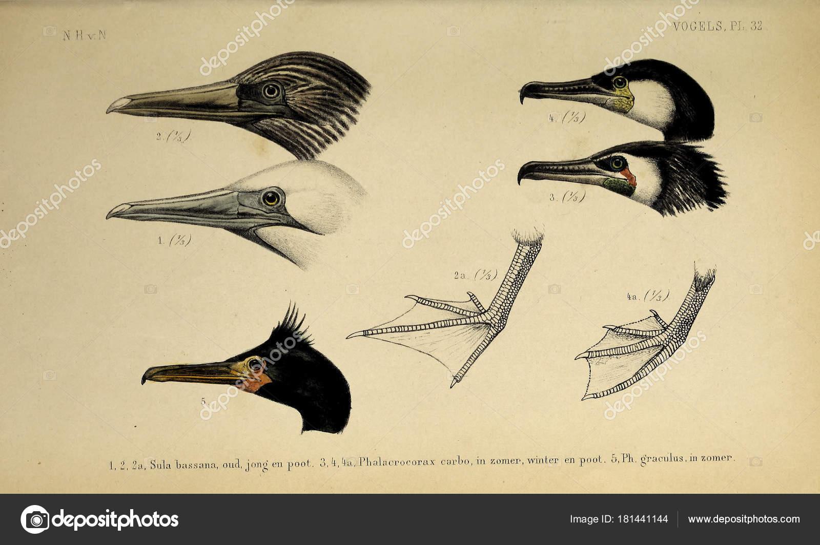8 v ptáka