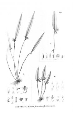 Illustration of plant. Retro picture