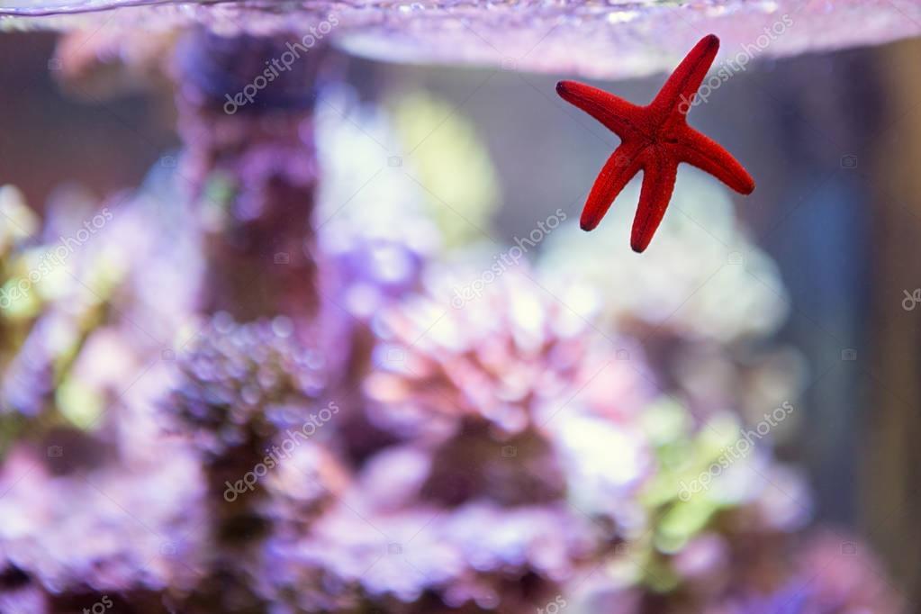 Aquarium with sea star