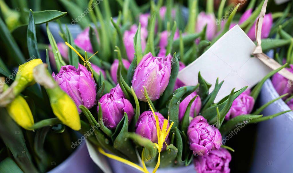 Purple tulips in flower shop