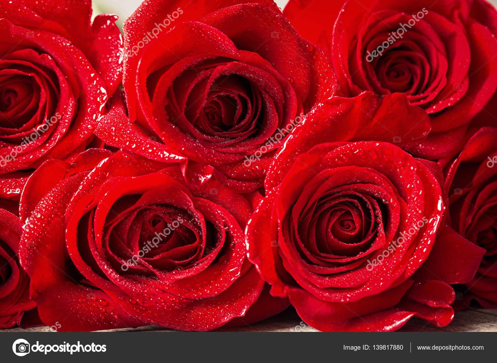 Bella Ravvicinata Di Una Rosa Rossa Con Gocce Dacqua Foto Stock