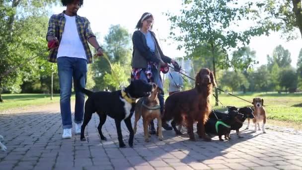 Szakmai Dog Walker a parkban sok különböző kutyák