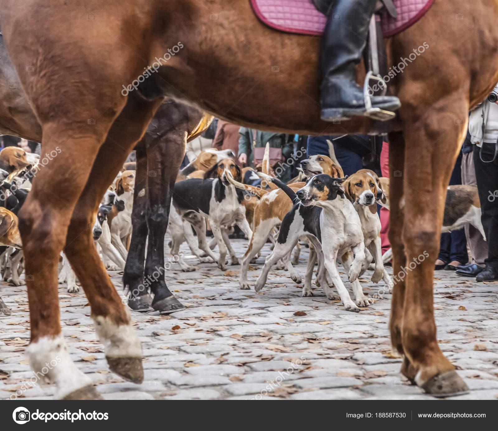 Perros Caza Movimiento Enmarcada Por Tamer Patas Caballo Cuerpo ...
