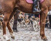 Lovecké psy v pohybu rámují tím krotitelem je kůň nohy a tělo, během show ve venkovské Francie