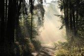 Percorso di foresta ad alba