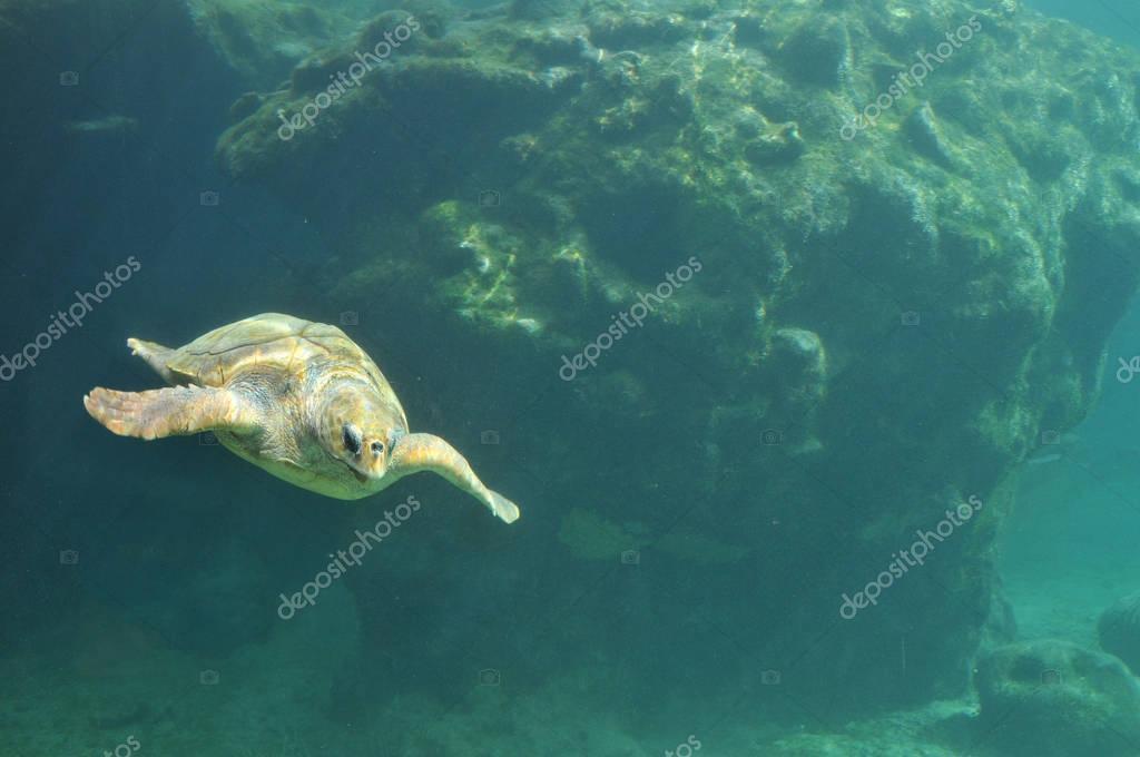 Sea Turtle Aquarium view inside a Turtles hospital in Reunion Is