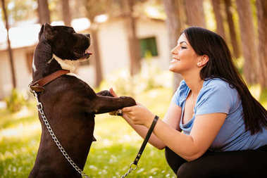woman playing with her cute stafford terrier