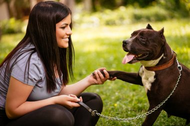 Cute stafford terrier giving paw to a young girl in the park.