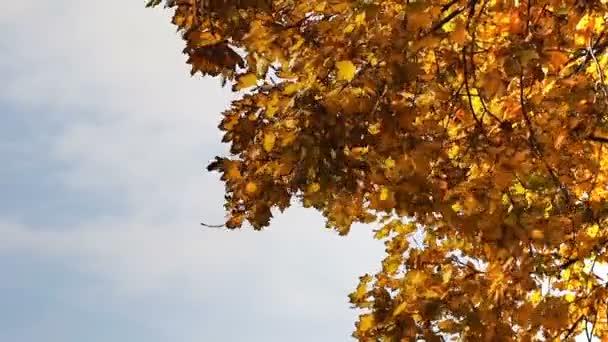Herbst bunte Blätter wehen im Wind