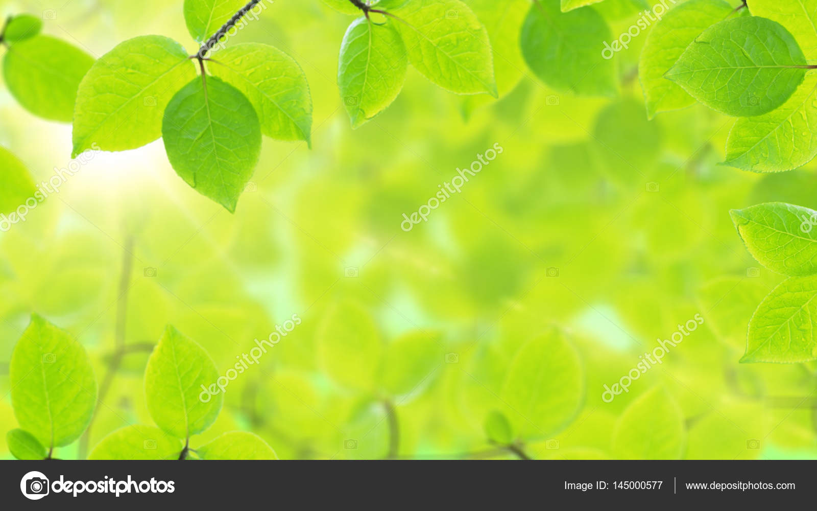 Spring background, natural frame of beautiful green leaves — Stock ...