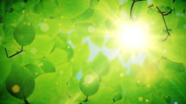 atural keret, gyönyörű zöld levelek