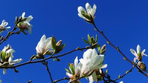 Jarní pozadí, světlé jarní slunečný den s modrou oblohou