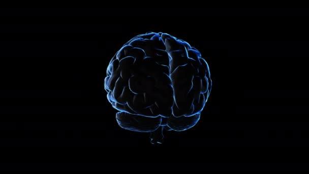 3D model lidského mozku
