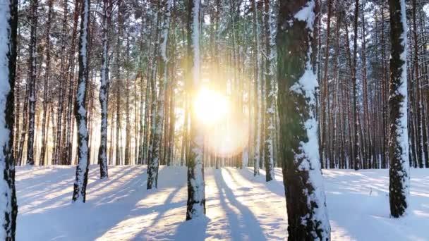 klidné zimní přírodní zátiší lesní krajiny v západu slunce