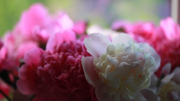 Pink plant flower peony petals