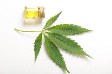 Cannabis leaves CBD oil hemp products