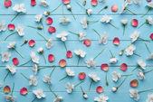 Dekorativní vzor bílé Třešňové květy a červené lístky