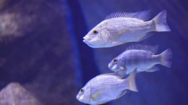 Under water view on sea fishes