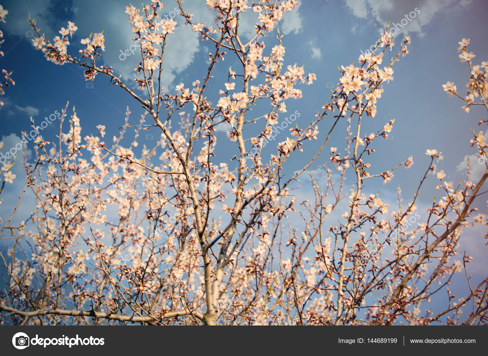 Blooming Trees In Spring Stock Photo Massonforstock 144689199