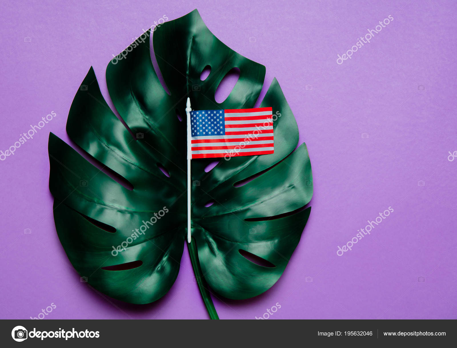 American Flag And Palm Leaf On Purple Background Photo By Massonforstock