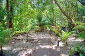 Selingan želví ostrov poblíž Borneo v Suluského moře