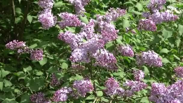 Detail fialovými květy ve větru