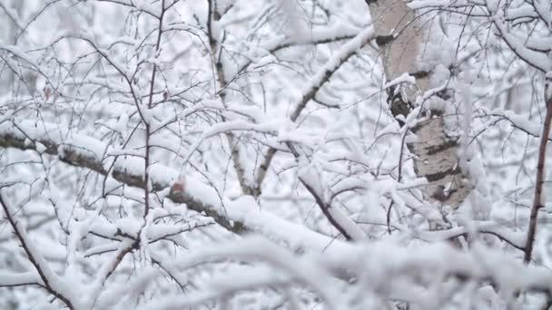 Birch tree branches under the snow