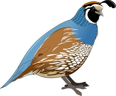 guail cartoon style icon
