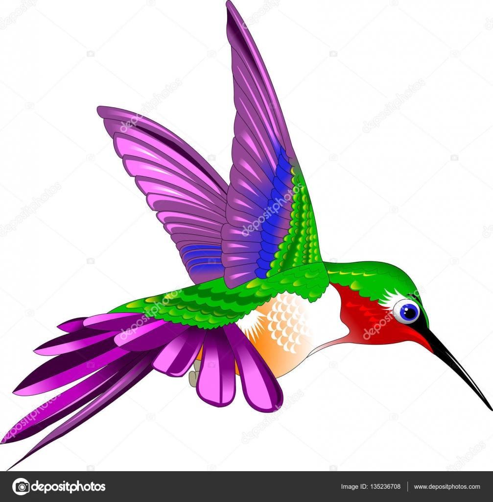 Ilustração De Pássaro Beija-flor