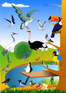birds in nature illustratin